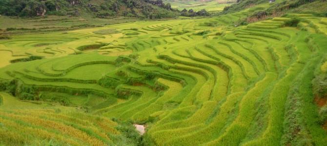 Vietnam – Hanoi & Sapa