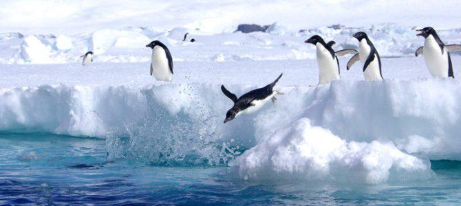 Antarctic Peninsula – Paulet Island