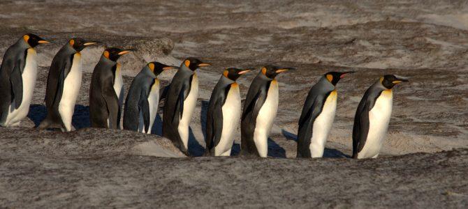 Falkland Islands – East Falkland (Volunteer Point & Stanley)