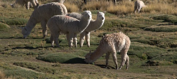Peru – Punta Sal, Trujillo, Lima, Paracas, Huacachina, Nazca, Arequipa, Cusco, Machu Picchu & Lake Titicaca