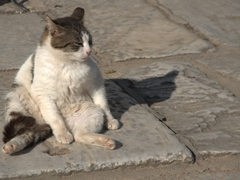 A lazy cat lounges the morning away; Ephesus