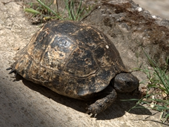 There were quite a few tortoises rambling about in Fethiye