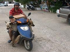 This guy trained his two big dogs to ride on a scooter with him; Kas
