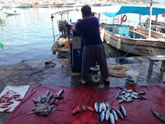 A local fisherman selling fish by the harbor; Fethiye