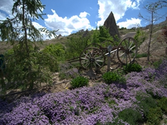Pretty purple flowers abound in Cappadocia