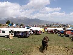 Panorama of Kilickaya bull festival