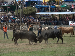 Lucky for us, there was a local bull festival in the village of Kilickaya