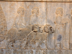 Fine bas-relief carving of sheep; Apadana Staircase, Persepolis