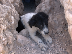 Poor puppy dog craving company near the stone tomb in Abarkuh