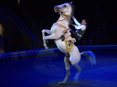 The highlight of the circus were the Akhal-Teke horses - gorgeous intelligent creatures!