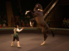A gigantic (and gorgeous) Akhal-Teke horse - just phenomenal to watch in action