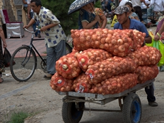 Pushing bags of onions through the Samarkand Bazaar