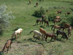 Horses grazing by the roadside - a common sight in Kazakhstan