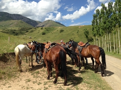 Our horses await us (5 hours for $30); Aksu-Zhabagly Nature Reserve