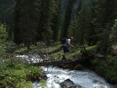 Robby crosses a river over a downed tree; Altyn Arashan
