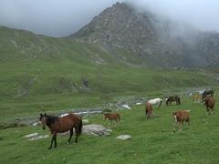 The wild horses don't seem to mind us; Altyn Arashan