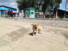 Adorable puppy begs for food at the Chaldybar border crossing