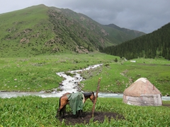 A kind owner draped a rain jacket over his favorite horse; Altyn Arashan