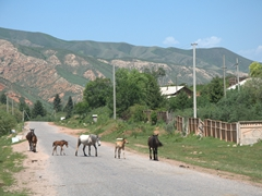Horses crossing the road; Jeti-Ögüz