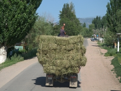 Truck full of hay; Bokonbaevo