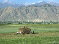 Hay loaders; Bokonbaevo
