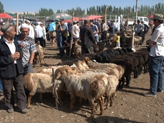 Hundreds descend on the weekly Kashgar Sunday market to purchase sheep, goats, horses, cows,  donkeys, camels or yaks