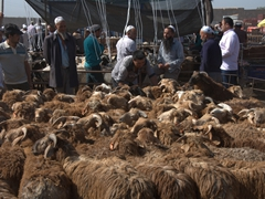 Sheep selection at the Kashgar Sunday Market