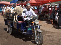 Bringing cattle to the Kashgar Sunday Market