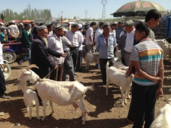 Goat section of Kashgar's Sunday Market