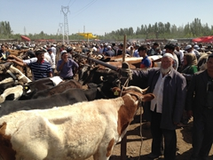 Massive cow section of the Kashgar Sunday Market