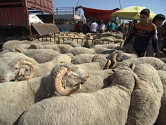Sheep are the most popular animal for sale at the Kashgar Sunday Market