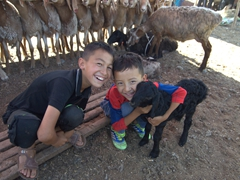 Two young boys fondle a lamb; Kashgar Sunday Market