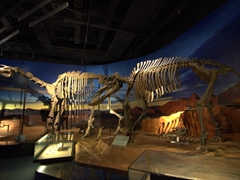 Dinosaur skeletons in the Turpan Museum