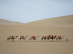 Camel train at the singing sand dunes; Mingsha Shan