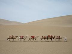 Camel train at the singing sand dunes; Mingsha Shan