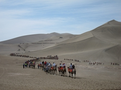 Hundreds of eager Chinese tourists ride atop camels at Mingsha Shan