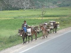 Donkey caravan; Xiahe