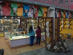 Yak skulls for sale; Chuanzhusi