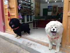 """Dogs"" greeting us at a souvenir shop in Langmu"