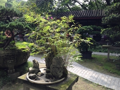 Garden at People's Park; Chengdu