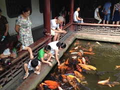 Feeding carp; Chengdu People's Park