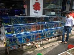 Tanks of fish; Flower & Bird Market in Kunming