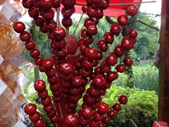Candied apples; Green Lake Park