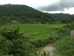 Rice paddy scenery near Luang Namtha