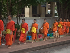 A dog accompanies the monks on their early morning alms donation routine; Luang Prabang