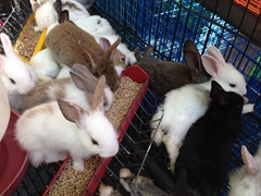Rabbits for sale by the roadside