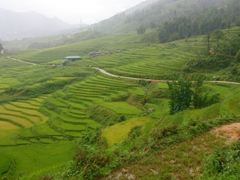 Rice paddies hugging the mountainside - a common sight in Sapa