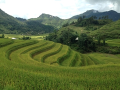 The scenery never got old during our 14 km trek in Sapa