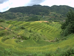 Rice paddies in all directions