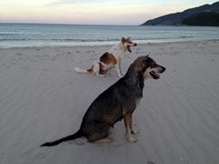 Jungle beach dogs